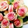 maC'aron Saint Valentin – Rose & Framboise fraîche
